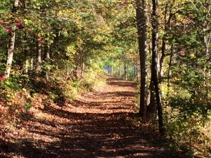 2015_Hidden Lake_October 17_Road across lake_leaf covered